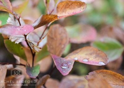 Ordinary Spot, Extraordinary Shot