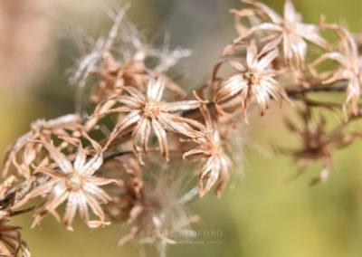 Macro Flora and Fauna