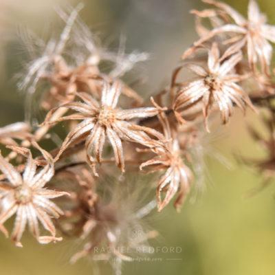 rachelredford-macroflora9