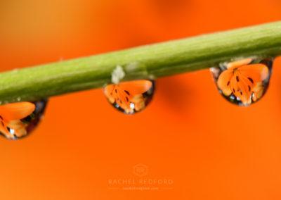 Macro Water Drop Photography
